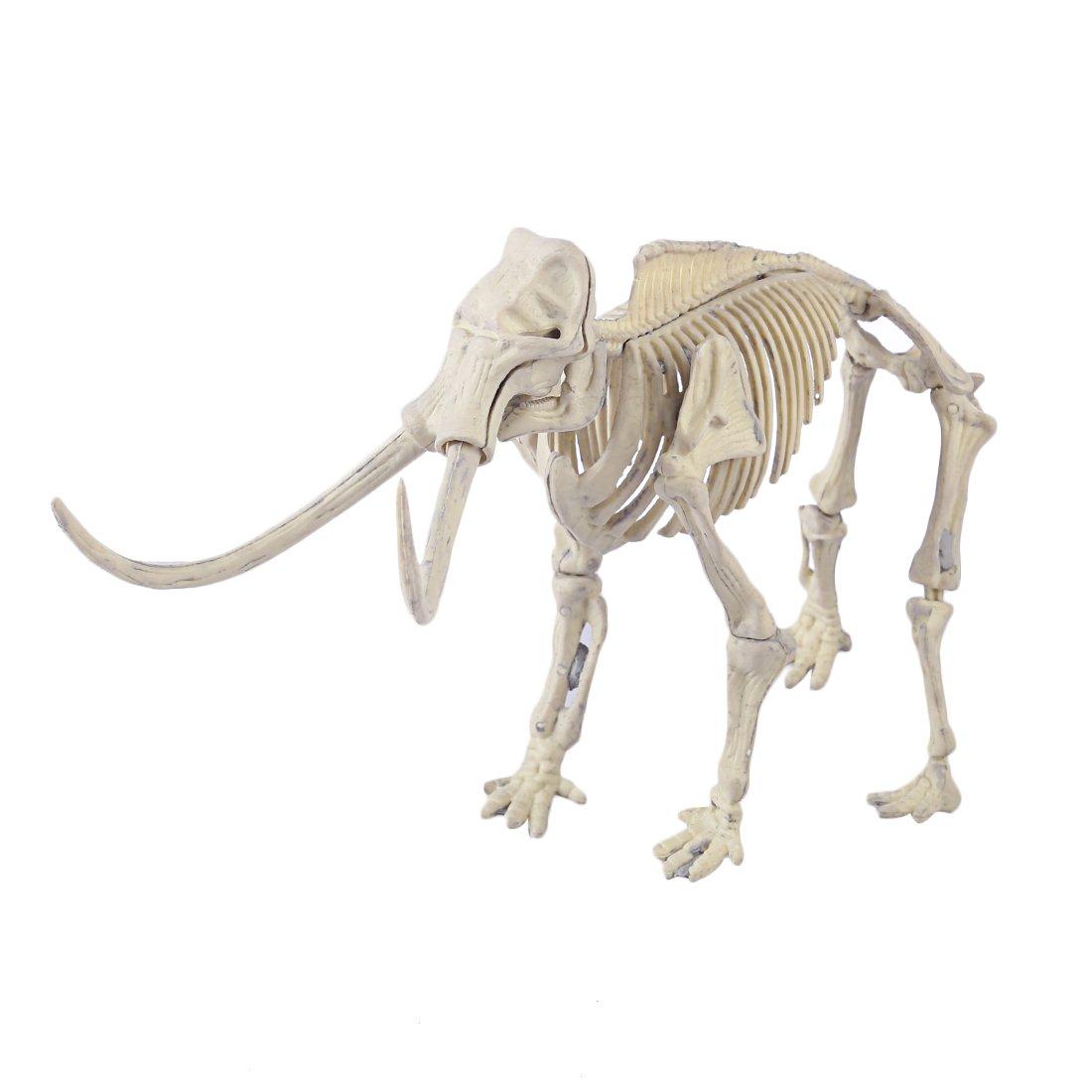 Creuser Un fossile de Dinosaure Deinonychus Dinosaure Kit Outil de Fouille Jeu Arch/éologie Jouet Tosbess Jouets de Arch/éologique Dinosaure