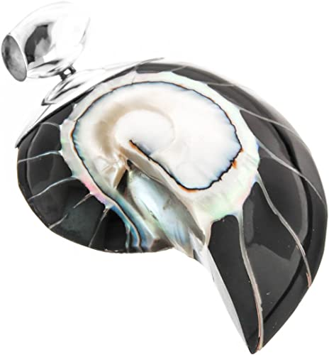 Amazon Com Genuine Nautilus Shell Black Resin Fill 925 Sterling Silver Pendant 2 3 8 Jewelry
