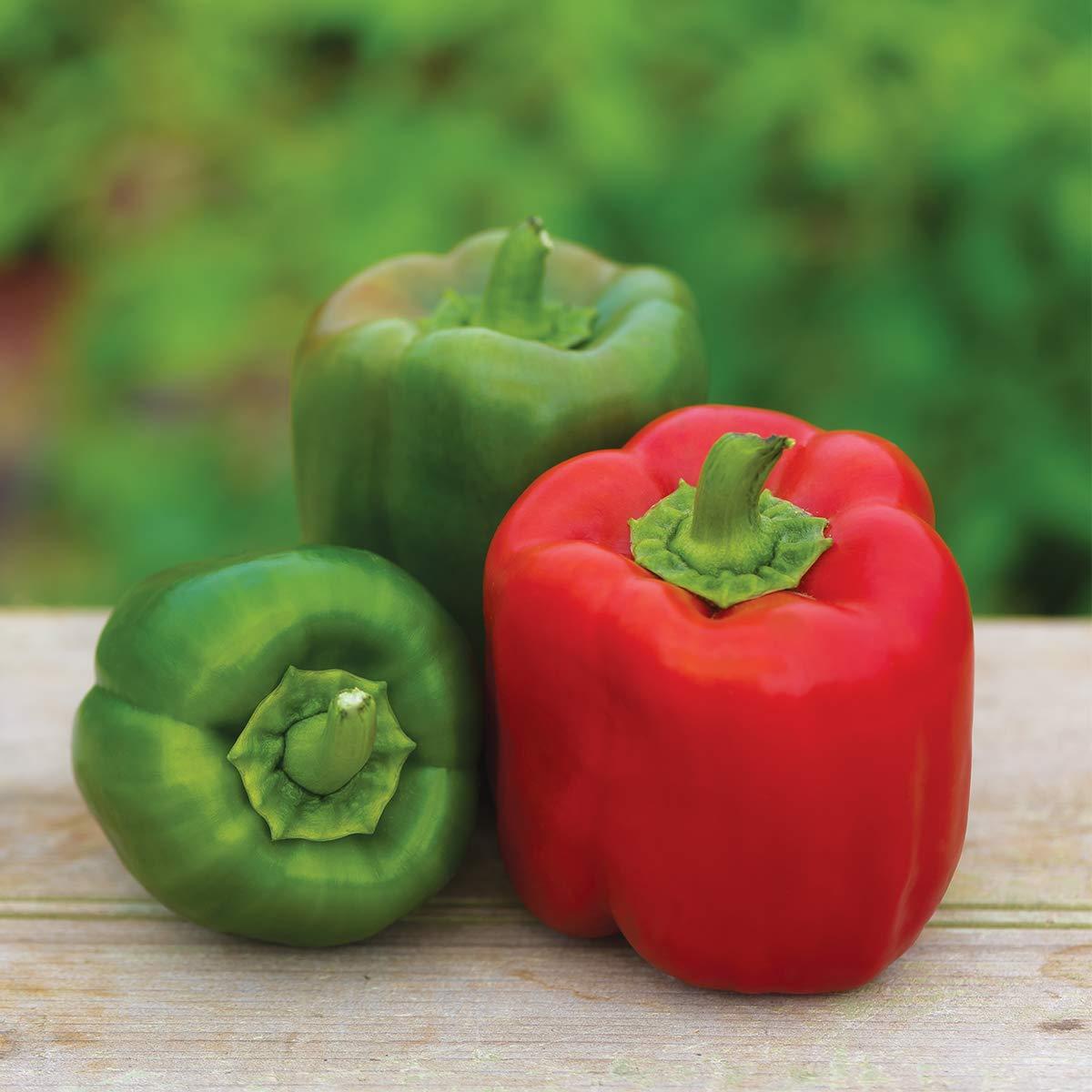 Burpee Sweet Candy Apple' Hybrid Bell Pepper, 3 Live Plants | 2 1/2'' Pot