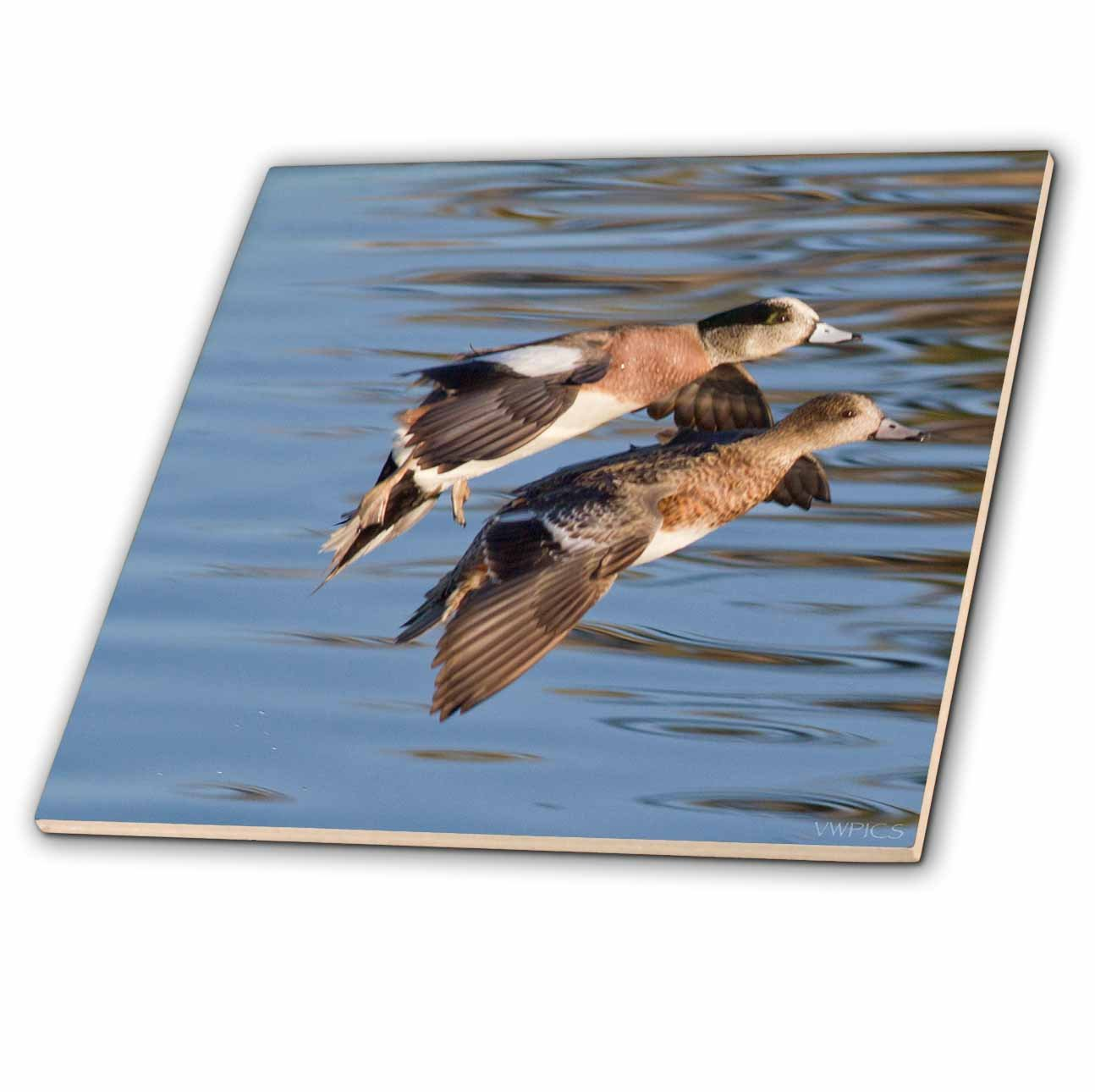 California Ceramic Tile 3dRose ct/_45757/_3 Male and Female American Wigeon Ducks Landing with Reflection Bolsa Chica Wetlands 8-Inch