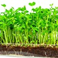 """Microgreen 3 Pack Refill - Pre-measured Soil + Seed, Use with Window Garden Multi-Use 15"""" x 6"""" Planter Tray. Easy and Convenient."""