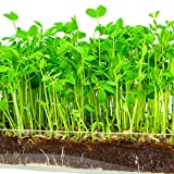 """buy Microgreen Organic Pea Shoot 3 Pack Refill–Pre-measured Soil + Seed, Use with Window Garden Multi-Use 15"""" x 6"""" Planter Tray. Easy and Convenient, Enough to Sprout 3 Crops of Superfood. now, new 2018-2017 bestseller, review and Photo, best price $12.99"""