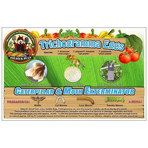 Caterpillar & Moth Exterminator- Trichogramma 30 Squares/ 100,000 Eggs by Bug Sales