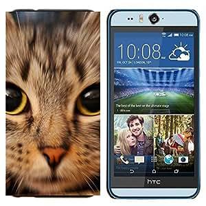 TECHCASE---Cubierta de la caja de protección para la piel dura ** HTC Desire Eye ( M910x ) ** --Gatito de Shorthair del americano Maine Coon