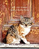 2019 - 2020   18 Month Weekly & Monthly Planner: July 2019 to December 2020  Monthly Calendar with U.S./UK/ Canadian/Christian/Jewish/Muslim Holidays– ... in Review/Notes 8 x 10 in. Cute Kitten Vol 5