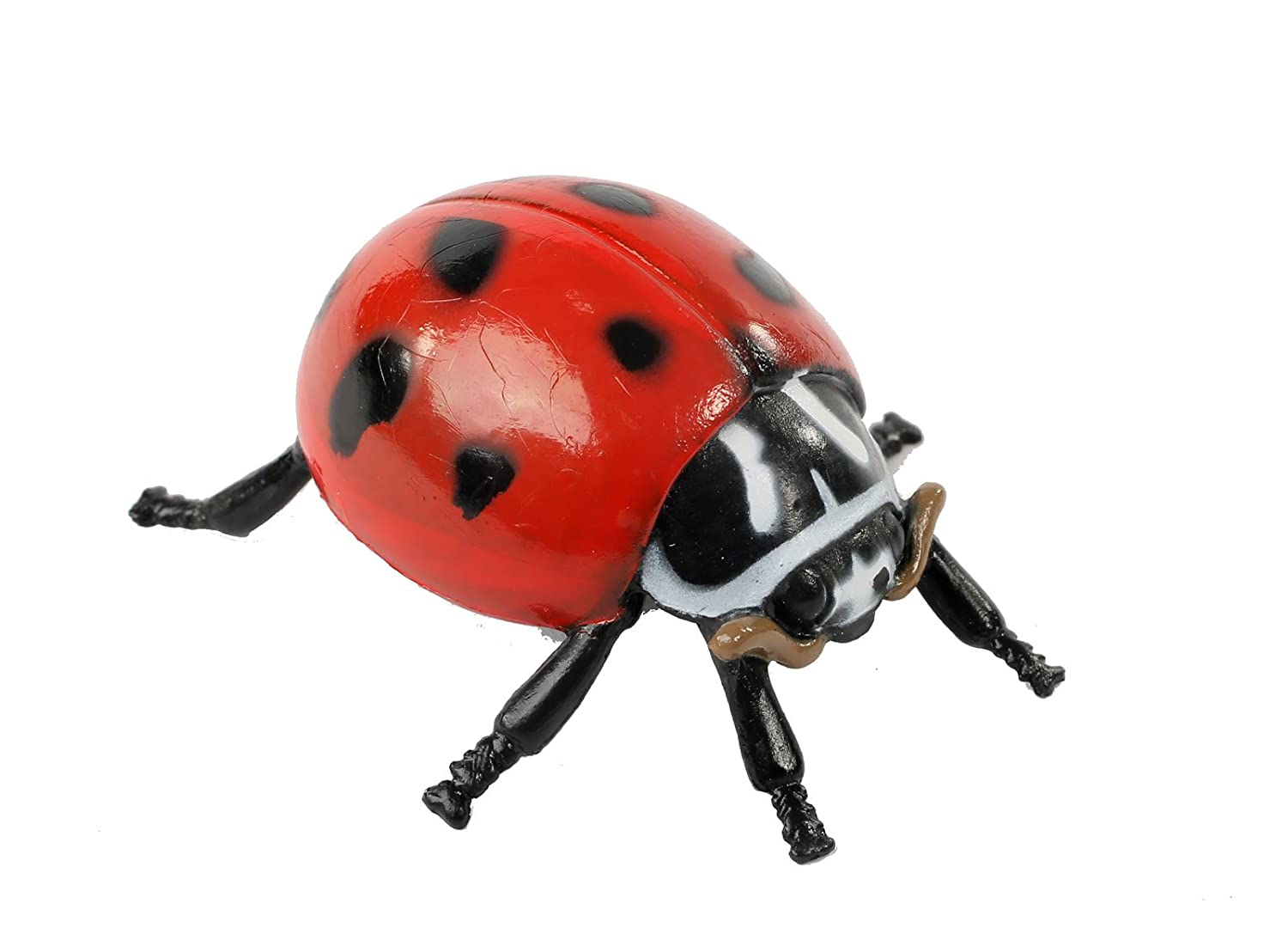 amazon com insect lore ladybug life cycle stages toys u0026 games