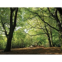 J.P. London PMUR2217 Peel and Stick Removable Wall Decal Sticker Mural, Forest Escape Path in Trees Fall Hike, 4 X 3-Feet