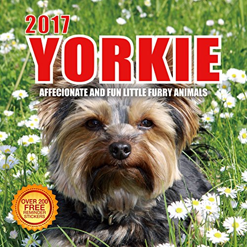 2017 Yorkie Calendar - - Affectionate and Fun Little Furry Animals - 12 X 12 Wall Calendar