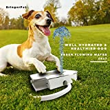 BringerPet Dog Drinking Water Fountain – Outdoor Auto Pet Water Dispenser System for Fresh Water – Suitable as Large or Small Dog Water Fountain Feeder Automatic – Easy to Use, Sturdy Build