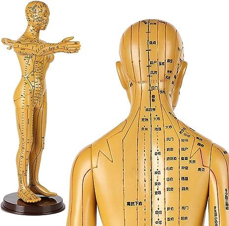 LUCKFY Anatomía Humana - 50cm Humano Meridiano acupunto Modelo Cobre Caucho Hembra acupuntura Aprendizaje Meridianos acupuntos Herramienta de enseñanza médica Juguete: Amazon.es: Deportes y aire libre
