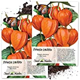 Seed Needs, Chinese Lantern (Physalis Alkekengi) Twin Pack of 200 Seeds Each