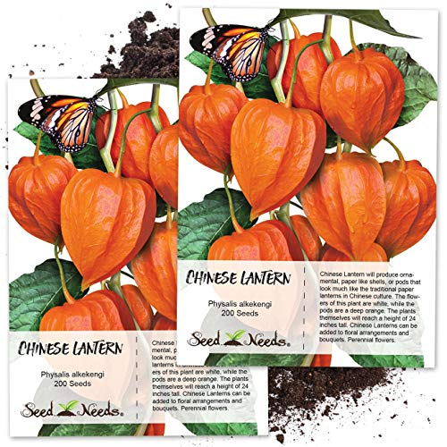 Chinese Lantern Plants - Seed Needs, Chinese Lantern (Physalis Alkekengi) Twin Pack of 200 Seeds Each