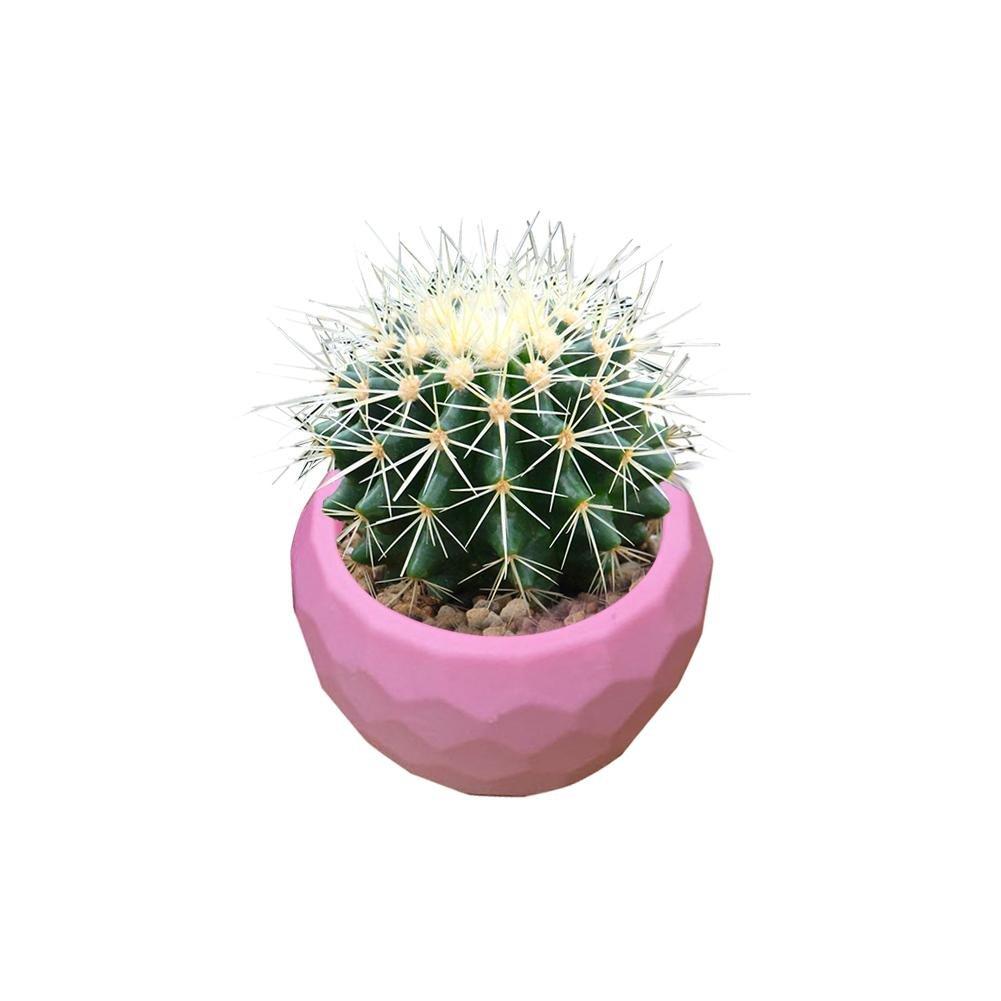 Molde de Silicona para Maceta de Plantas suculentas en 3D, Cemento de Yeso Planta carnosa Maceta de Flores Bonsai Molde de Silicona, Cactus de poliéster de ...