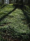 Anemone carpet, Sweden 30x40 photo reprint