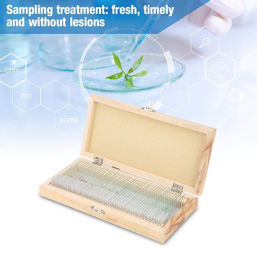 Mikrobiologische Bakterienproben Biologie Mikroskop Scheiben Labor Probe mit Holzkiste 50 st/ücke Objekttr/äger Biologie Glas Pr/äparierte Objekttr/äger