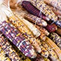 Ornamental Indian Corn Garden Seeds - Non-GMO, Heirloom, Open Pollinated Vegetable Gardening Seeds - Decorative