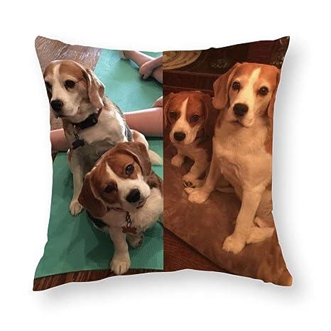 Hardon Fundas de Almohada Happy Beagle para Perro, diseño ...