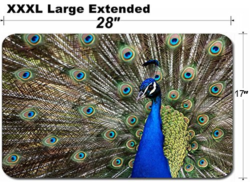 - MSD Large Table Mat Non-Slip Natural Rubber Desk Pads Image ID: 3959683 This Fellow was a reall Show Off Very Colourful Peacock