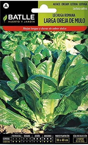 Semillas Hortícolas - Lechuga Romana larga verde claro - Batlle ...