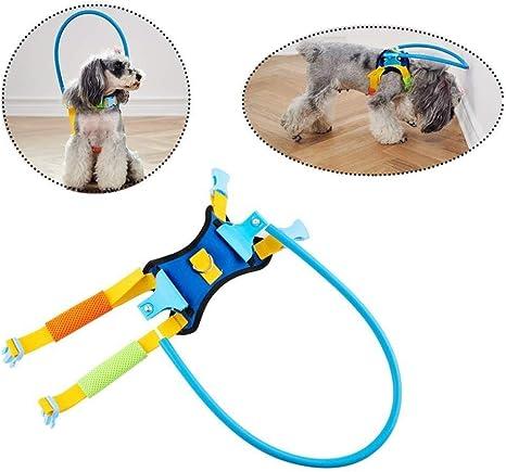 Anticolisión for mascotas ciegas , Círculo de protección for ...