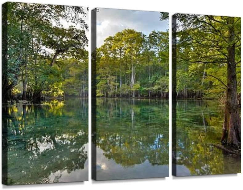 HABEN ARTWORK Manatee Springs on The Suwanee River Florida Cypress Tree Swamp Print On Canvas Wall Artwork Modern Photography Home Decor Unique Pattern Stretched and Framed 3 Piece