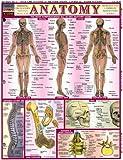 Anatomy, BarCharts Inc., Staff, 1572222778