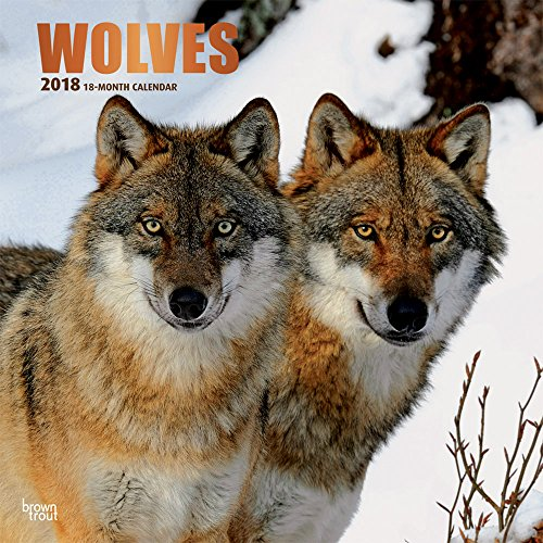 Wild Animals Wall (Wolves 2018 12 x 12 Inch Monthly Square Wall Calendar with Foil Stamped Cover, Wildlife Animals (Multilingual Edition))