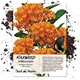 Package of 100 Seeds, Butterfly Milkweed/Monarch Flower (Asclepias tuberosa) Open Pollinated Seeds by Seed Needs USA