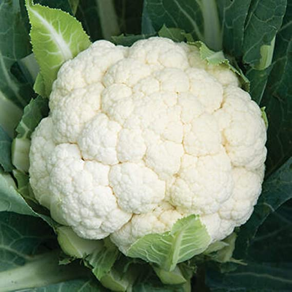 500x White Cauliflower Seeds Nutritious Edible Vegetable Garden Roof Decor