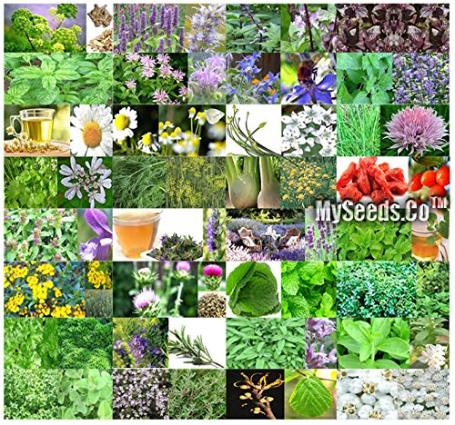 Borage Combo - 32 Types MEDICINAL & CULINARY Herb Combo, Seeds - From Angelica to Yarrow - By MySeeds.Co