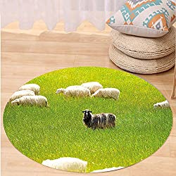 Kisscase Custom carpetNature Black Sheep between White Goats on Grass Field Meadow Animal Farm Landscape for Bedroom Living Room Dorm Fern Green Cream
