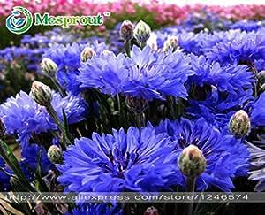 20 semillas / pack semillas de flor de la flor del Mimosa de hadas en macetas del balcón semillas Bashfulgrass