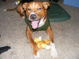 Pet Supplies : Pet Squeak Toys : KONG Duckie Dog Toy