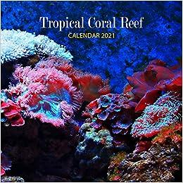 Reef Calendar 2021 Pictures