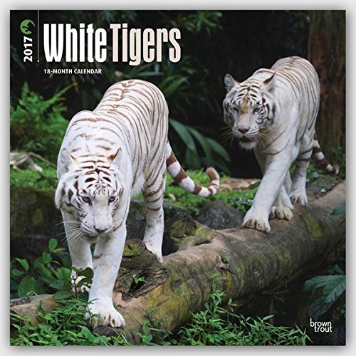 White Tigers 2017 Square (English and Multilingual Edition)