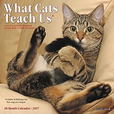 2017 What Cats Teach Us Mini Wall Calendar