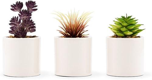 Small Faux Succulent Plants – Set Of 6