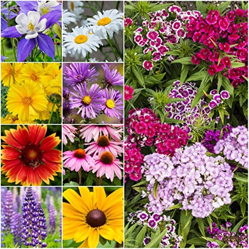 Package of 30,000 Seeds, Perennial Wildflower Mixture (100% Pure Live Seed) Non-GMO Seeds by Seed Needs ()