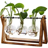 XXXFLOWER Plant Terrarium with Wooden Stand, Air Planter Bulb Glass Vase Metal Swivel Holder Retro Tabletop for…