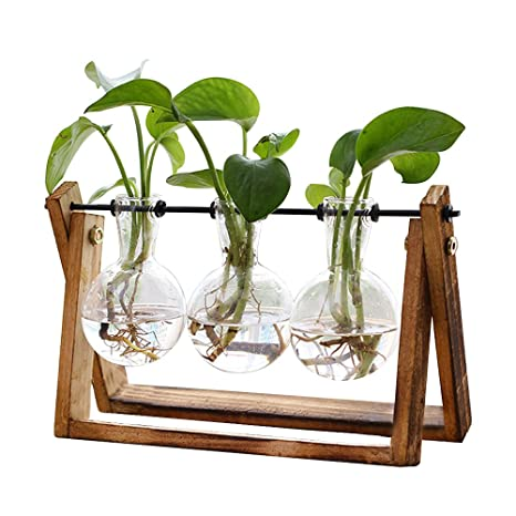 Amazon Com Plant Terrarium With Wooden Stand Air Planter Bulb