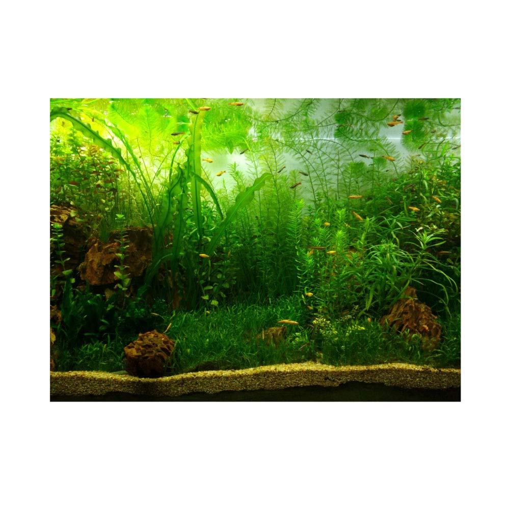 Aquarium Background Fish Tank Decorations Pictures PVC Adhesive Poster Water Grass Style Backdrop Decoration Paper Cling Decals Sticker(61 * 30cm) Filfeel