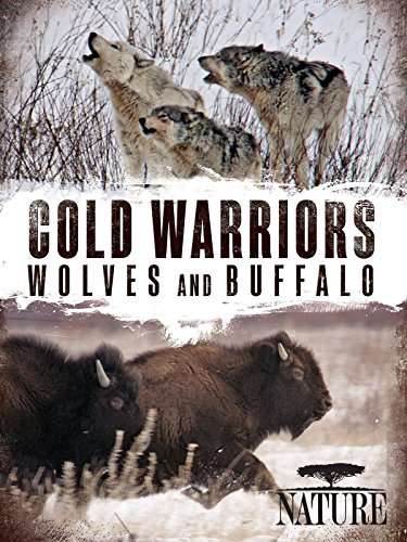 Nature: Cold Warriors: Wolves and Buffalo