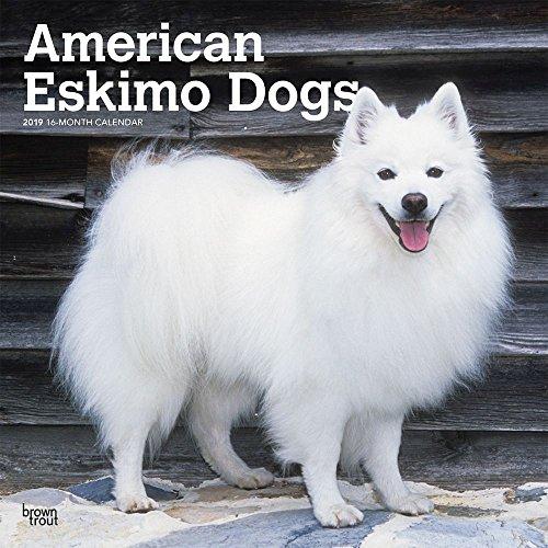 American Eskimo Dogs 2019 Wall Calendar ()