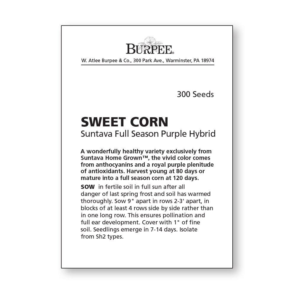 Burpee Suntava Full Season Purple Sweet Corn Seeds 300 seeds by Burpee (Image #5)