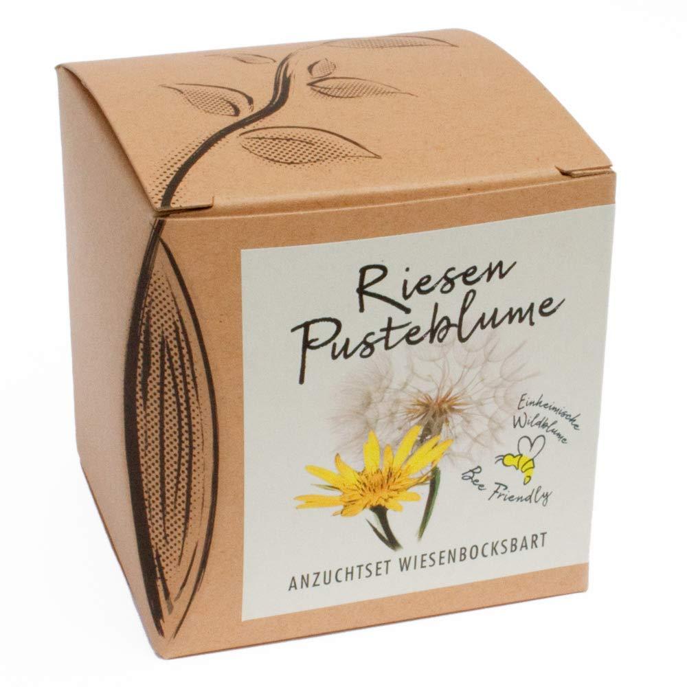 Geschenk-Anzuchtset Riesenpusteblume (Wiesenbocksbart) Naturkraftwerk e.U.