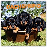 Dachshund Puppies 2019 12 x 12 Inch Monthly Square Wall Calendar, Animals Dog Breeds Puppies