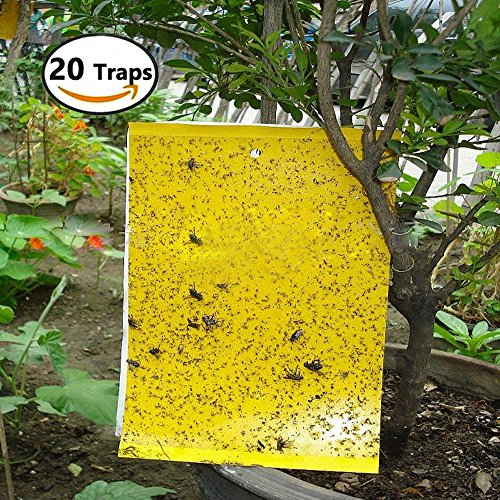 t Sticky Trap, Dual Sided Adhesive Trap Protect Plant, Garden, Kitchen from Fungus Gnats, Whitefly, Aphid, Leaf Miner, Flying Insects, Bugs (8x6 Inches, 20Pcs Twist Ties Included) (Yellow Fruit Tree)
