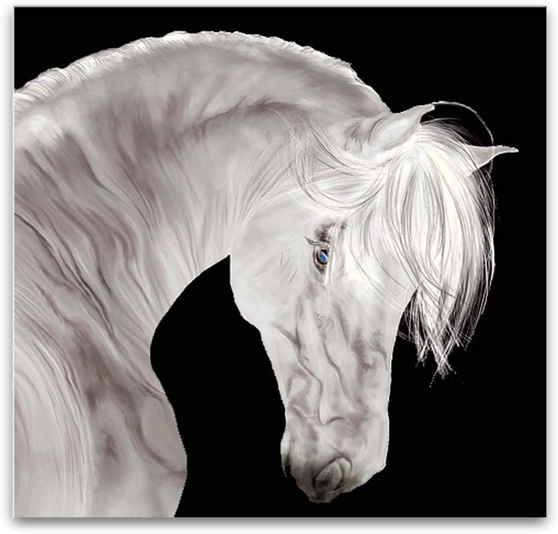 Startonight Cuadro sobre Vidrio Blanco y Negro Hermoso Caballo, Impresion en Calidad Fotografica Pintura Listo Para Colgar Diseño Moderno Decoración Formato Grande 60 x 60 CM