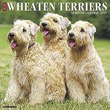 Just Wheaten Terriers 2019 Wall Calendar (Dog Breed Calendar)
