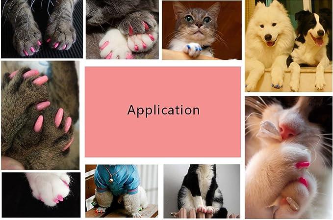 Fundas de uñas de goma suave y no tóxica para perros, de Best of Best, con pegamento adhesivo, protector de garras para perros, gatos, 20 unidades: Amazon.es: Productos para mascotas